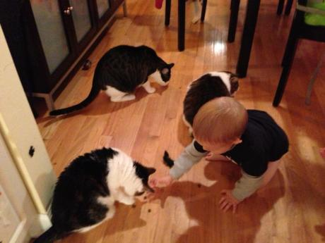 Jack feeding the cats treats