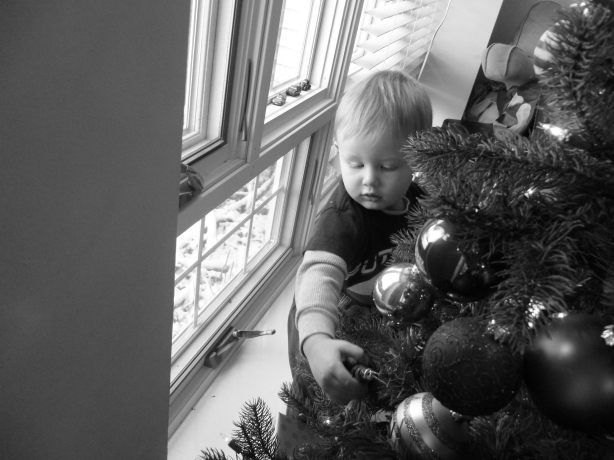 Loves the tree, lights, and ornaments